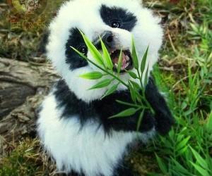 panda, animal, and cute image