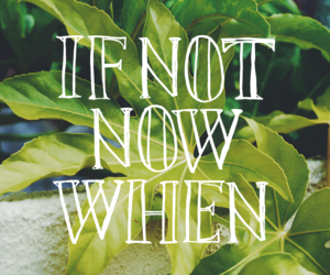 plants, green, and motivation image