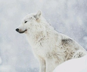 animals, snow, and wild image