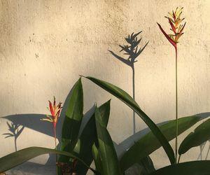 plants, alternative, and art image
