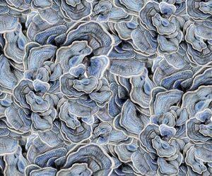 aquatic, coral, and lichen image