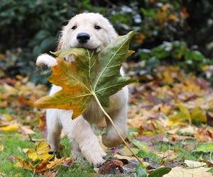 animals, autumn, and baby image