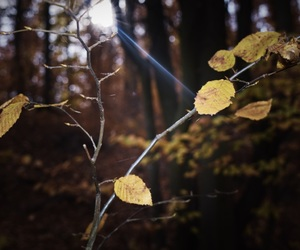 leaves, light, and sun image