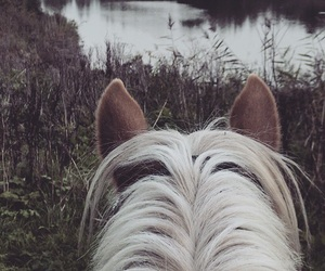 explore, forest, and horse image