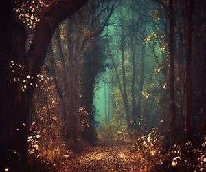 fantasy, forest, and magic image