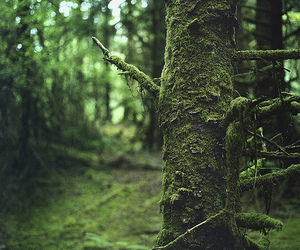 forest, green, and nature image
