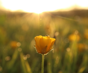 blur, bright, and buttercup image