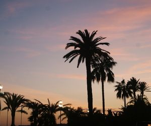 france, nice, and palms image
