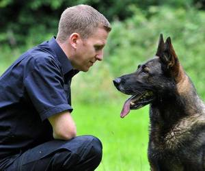 fashsion, family protection dog, and guard dogs training image