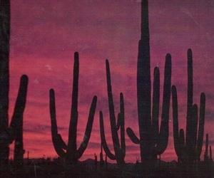 cactus, sky, and alternative image