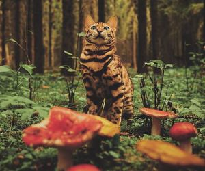cat and forest image