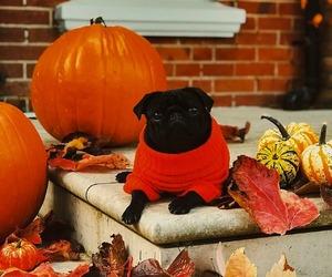 autumn, fall, and dog image