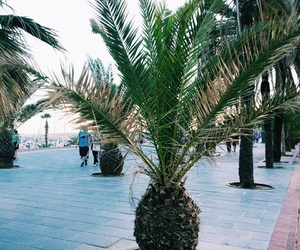 inspo, palm, and spain image
