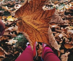 autumn, balkan, and gold image