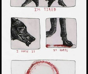 wolf, blood, and hurt image