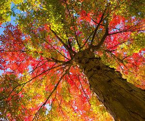 autumn, tree, and beautiful image