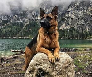 dog, animals, and mountains image