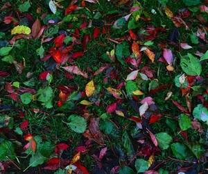 autumn, beautiful, and colorful image