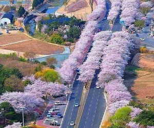 beautiful, japan, and landscape image