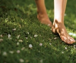 grass, flowers, and green image
