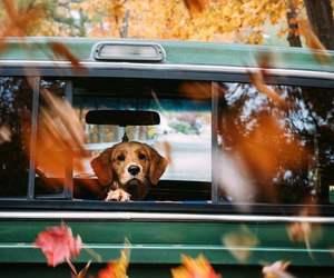 dog, autumn, and animal image