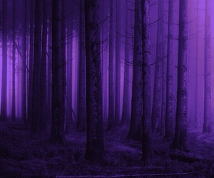 aesthetic, forest, and night image
