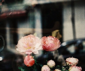 flowers, 50mm, and analog image