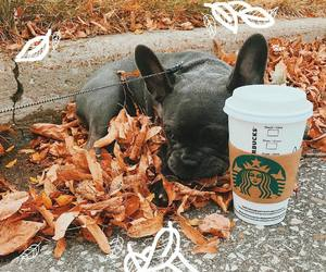 autumn, coffee, and dog image