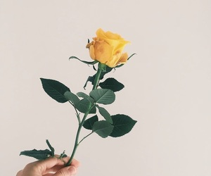 yellow rose, aesthetic flower, and rose aesthetic image