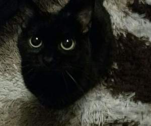 baby, black, and cat image