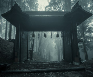 japan and forest image