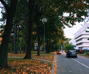 autumn, cars, and country image