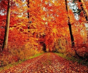 autumn, fall, and fallen leaves image