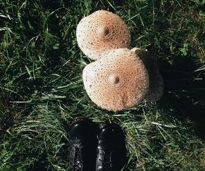 autumn, mushroom, and nature image