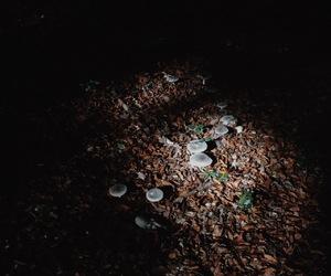 autumn, mushroom, and dark image
