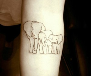 elephants and family image