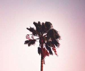 aesthetics, photography, and pink image