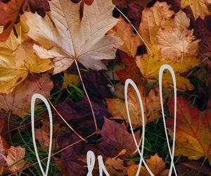autumn, fall, and autumn wallpaper image