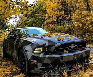 autumn, beauty, and car image