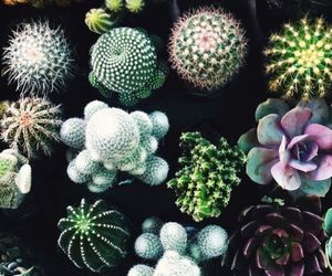 cactus, cactuses, and 🌵 image