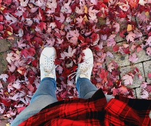 fall, picture, and stansmith image