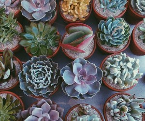 cactus, cactuses, and plant image