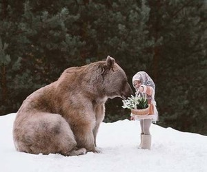 bear, animal, and cute image
