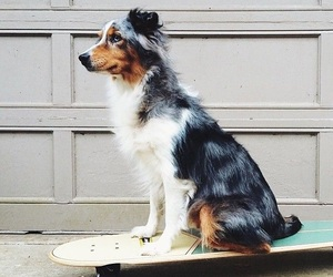 dog, cute, and skateboard image