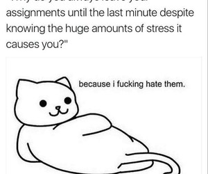 funny, homework, and lol image