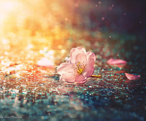 flowers, pink, and rain image