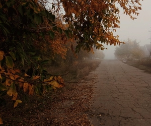 autumn, fall, and fog image