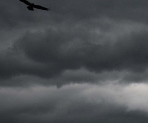 bird, clouds, and crow image