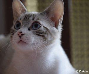 cats, Zeus, and zeusthegodofcats image