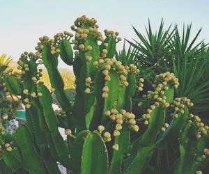 cactus, green, and sunset image
